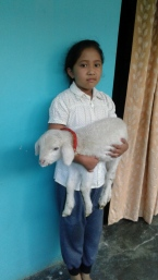 1_AZIMVTH_Ashram_Lamb_for_wool