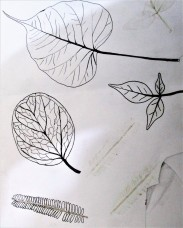 tk mf drawing 5 leaves